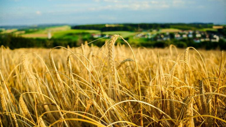 Creșterea economică record a României este bazată pe agricultură