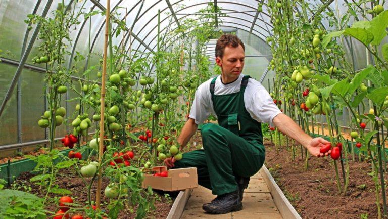 Stimulente financiare pentru angajarea tinerilor în agricultură