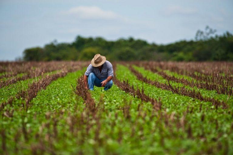 Eurostat: România are cea mai mare pondere a populaţiei ocupate în agricultură din Uniunea Europeană