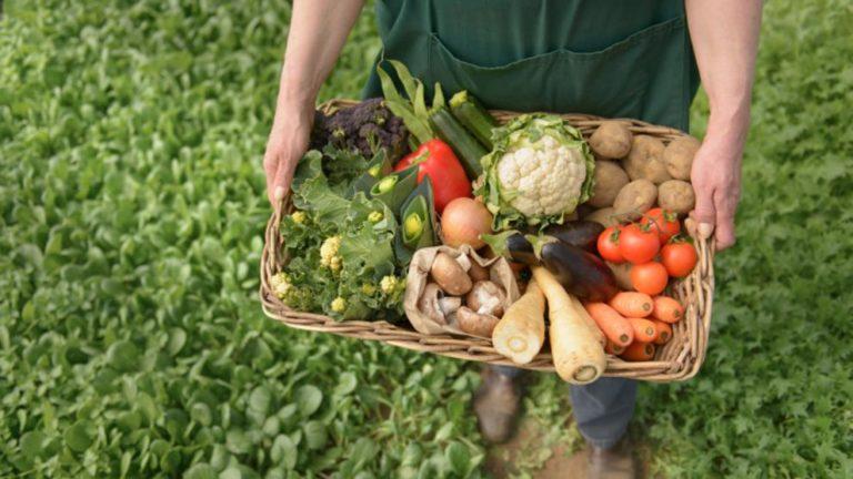 Agricultura ecologică, tot mai populară în România: cereale și legume fără chimicale