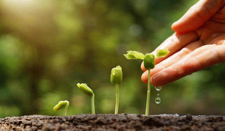 UE adoptă noi reguli privind agricultura ecologică