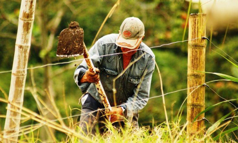 Fermierii vârstnici, 31% în totalul populaţiei din agricultura UE