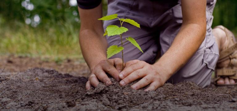Județul care nu primește vreun ban pentru prima împădurire