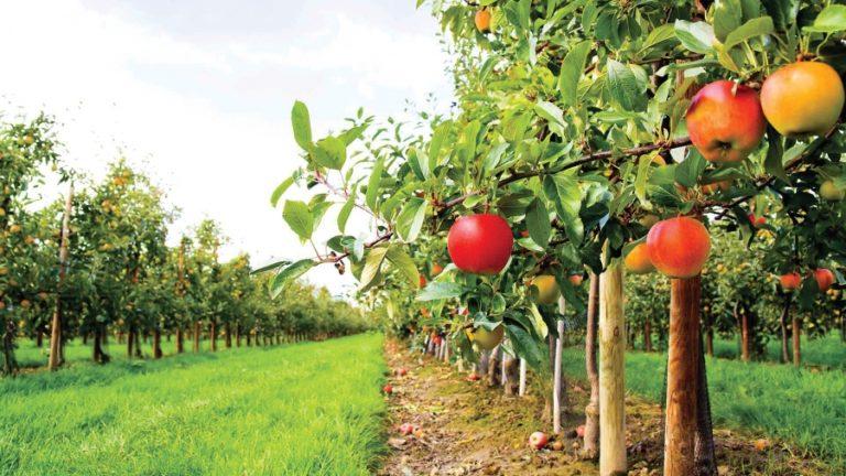 Pomicultura în toamna anului 2017