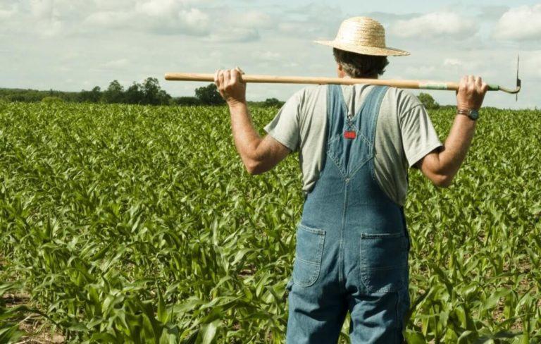 PNDR: cum se face selecția proiectelor pentru instalarea tinerilor fermieri